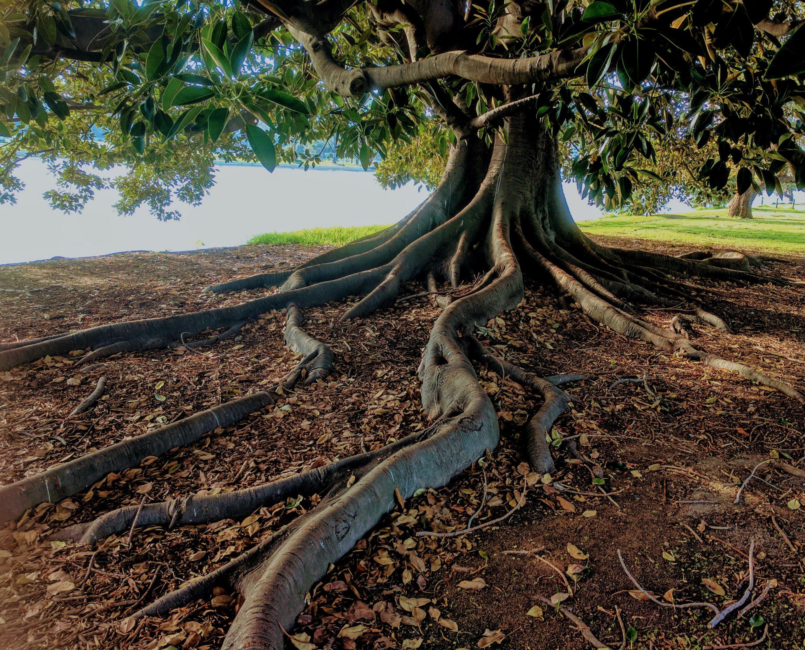 levensboom tekeken